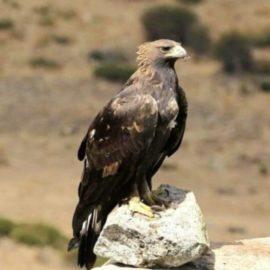 Majella: chiusi alcuni sentieri della valle dell'Orfento per proteggere le aquile